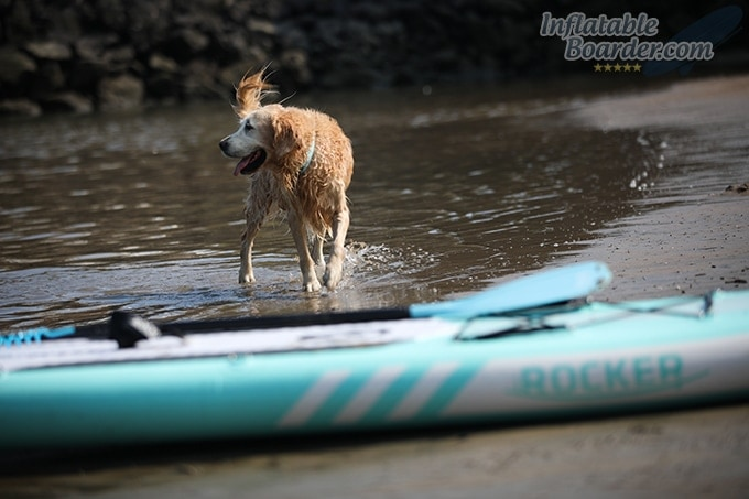 iROCKER ALL-AROUND 11' Paddling Pup
