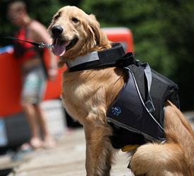 MTI Adventurewear Underdog Dog Life Jacket